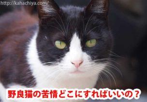 野良猫の苦情