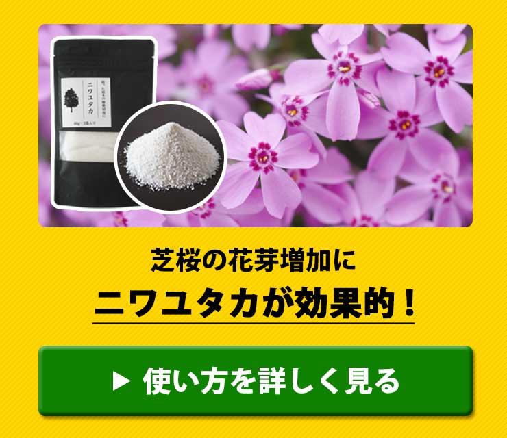 芝桜の花芽増加にニワユタカ