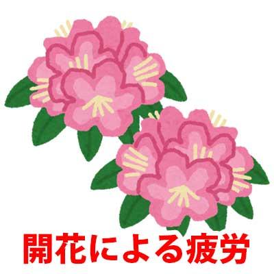 開花による疲労