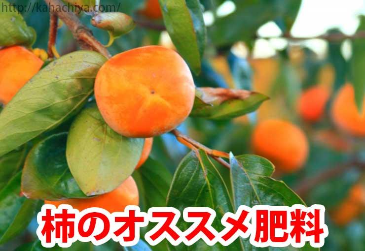 柿 おすすめ肥料