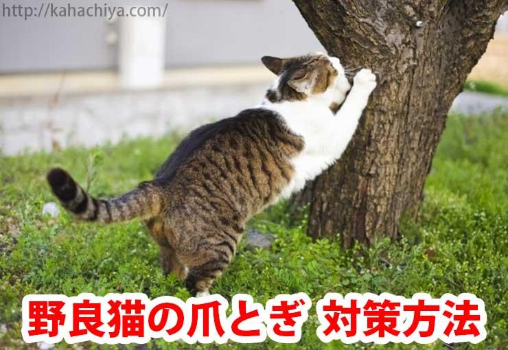 野良猫 爪とぎ