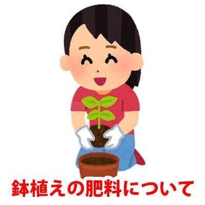 鉢植えハナミズキの肥料
