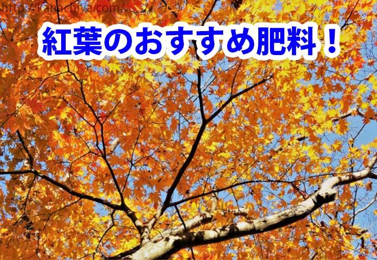 紅葉 カエデ 肥料