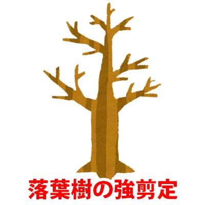 落葉樹の強剪定