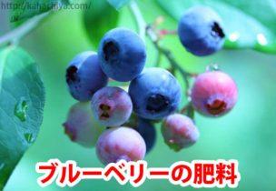 ブルーベリーの肥料