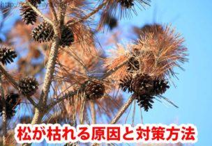 松が枯れる原因